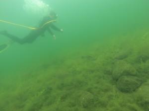 Milfoil Diver