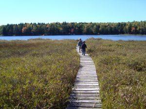 Holt Pond boardwalk